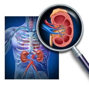 Cirugía renal, ureteral y vesical